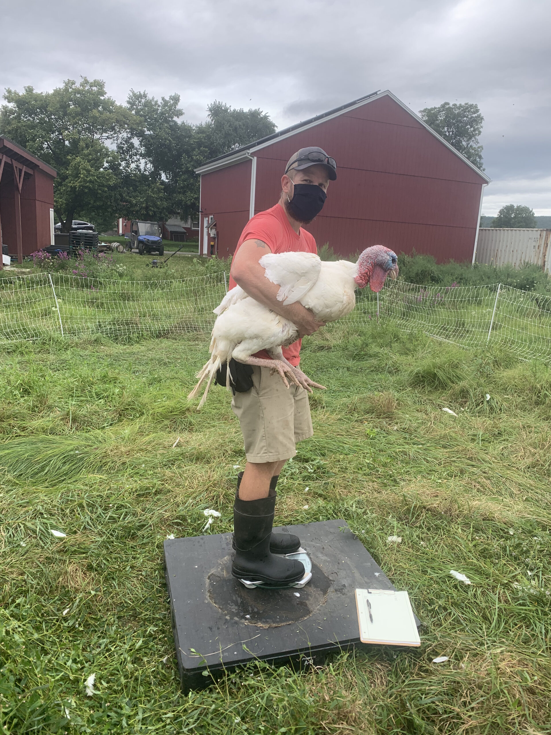 watering the turkeys