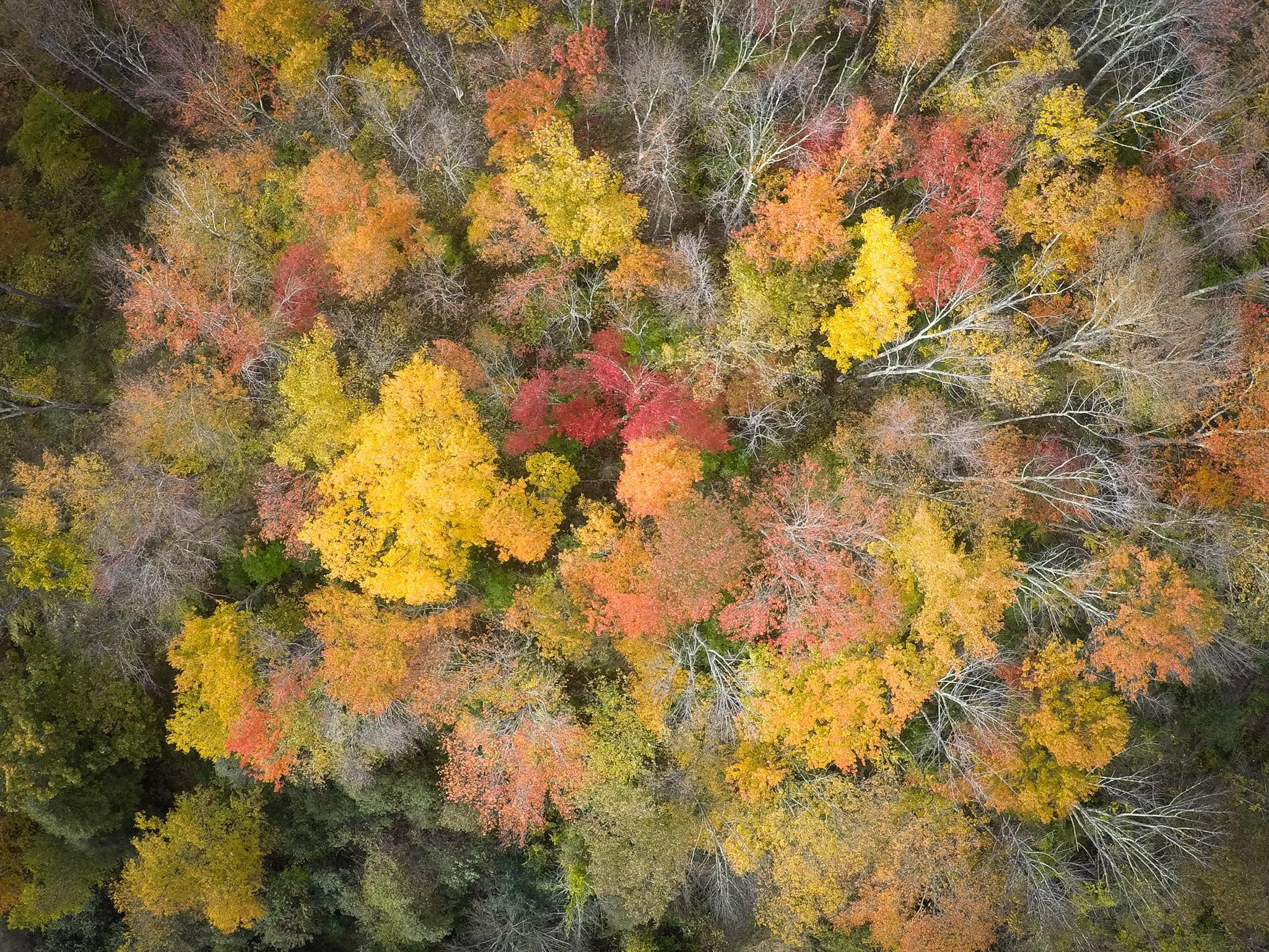 fall foliage overhead view